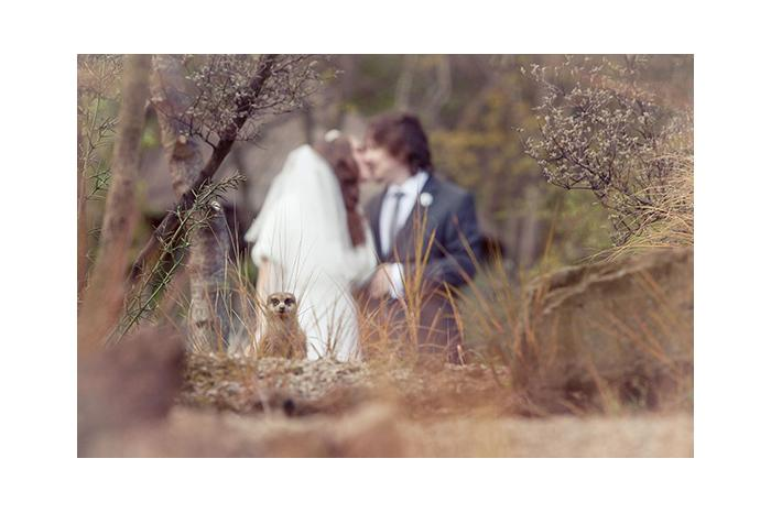 Wedding Photography Hot Shot: Meerkat Photobomber