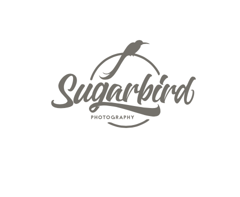 Sugar Bird Photography